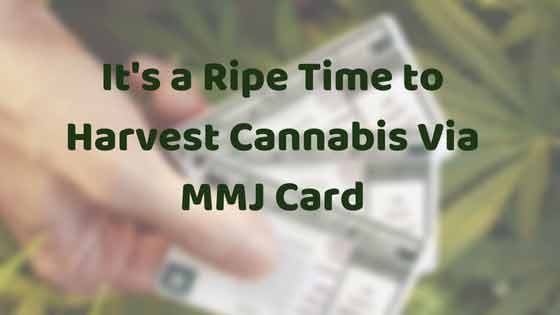 It's a Ripe Time to Harvest Cannabis Via MMJ Card