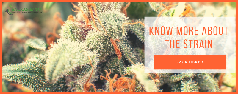 Know More About Jack Herer