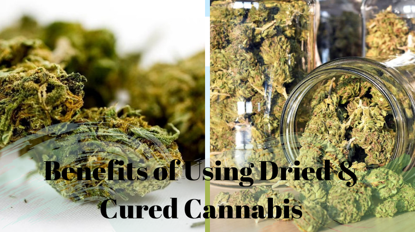 420 Med Evaluations in Sacramento Can Educate you About The Benefits of Using Dried & Cured Cannabis