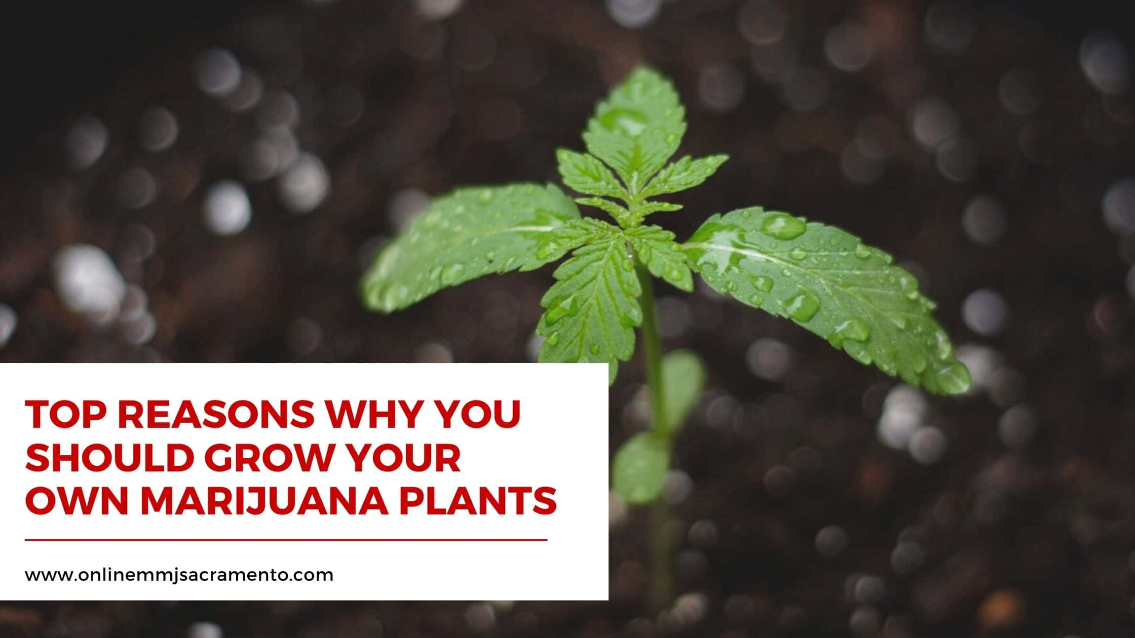Top Reasons Why You Should Grow Your Own Marijuana Plants
